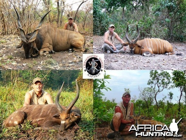 Lord Derby Eland, Bongo, Western Sitatunga and Harnessed Bushbuck