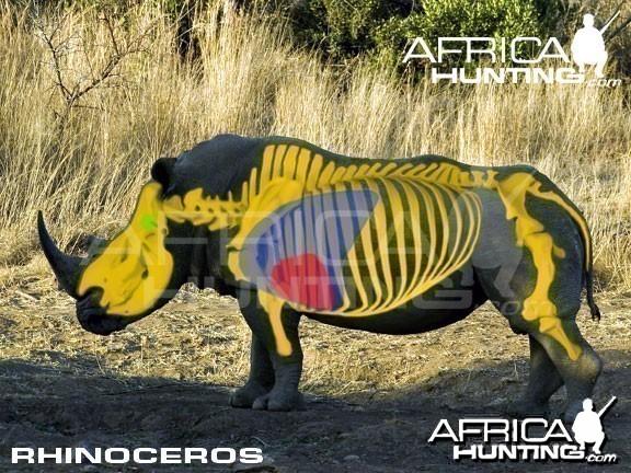 Hunting Rhinoceros Shot Placement