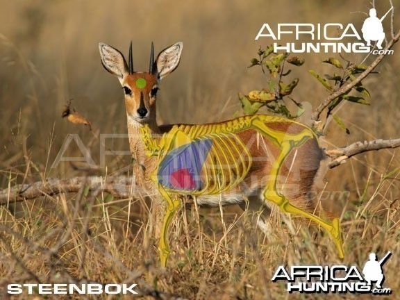 Hunting Steenbok Shot Placement
