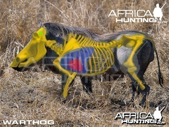 Hunting Warthog Shot Placement