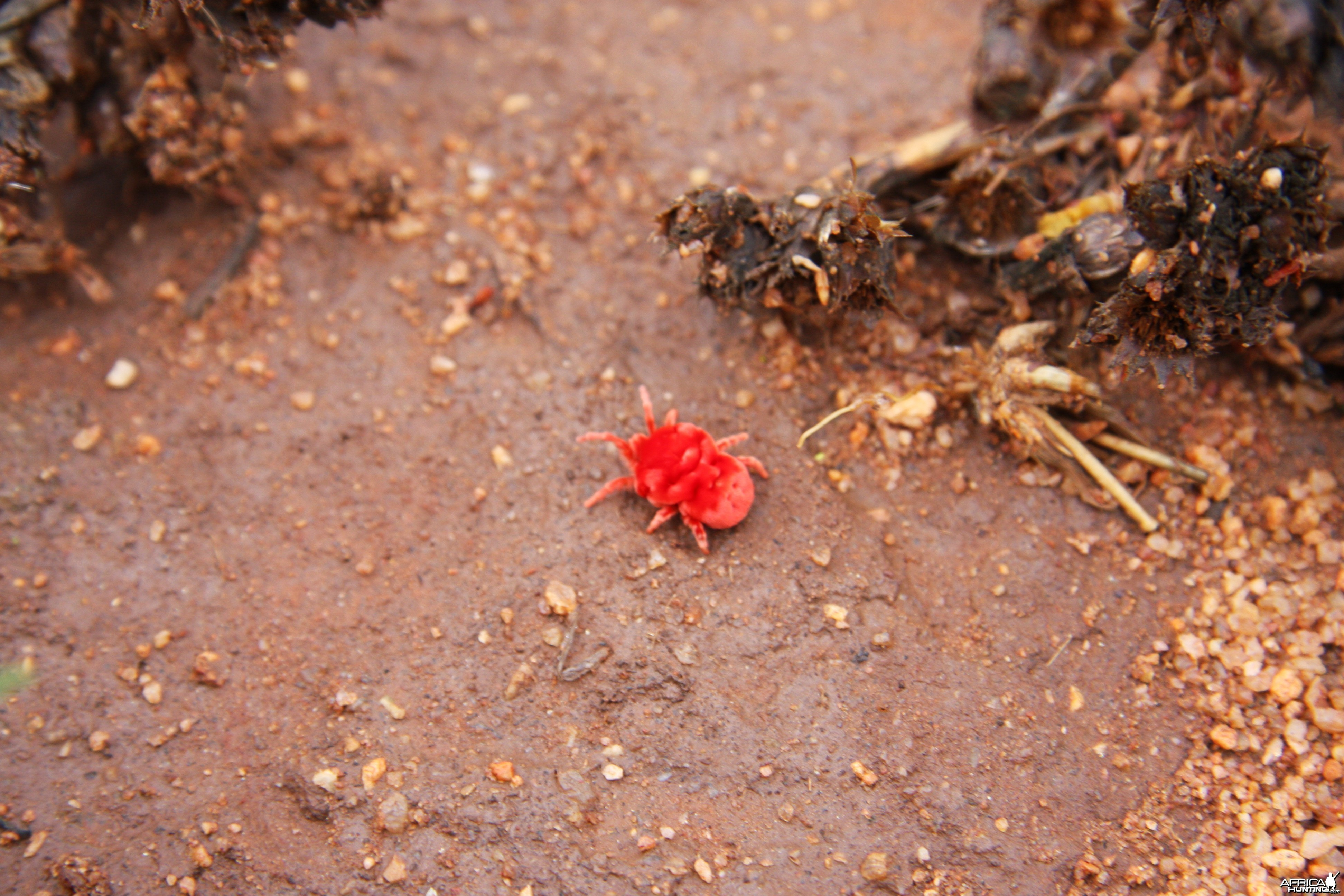 Red Spider Namibia