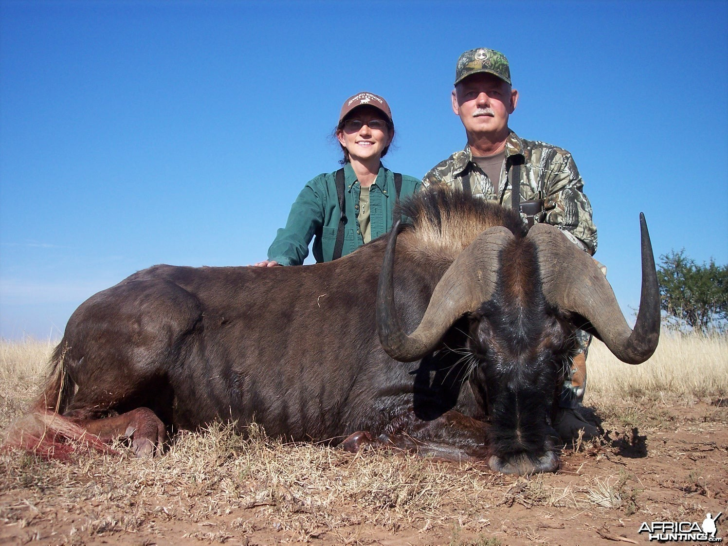 Black Wildebeest Hunt East Cape South Africa