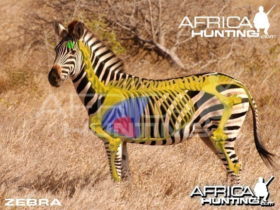 Hunting Zebra Shot Placement