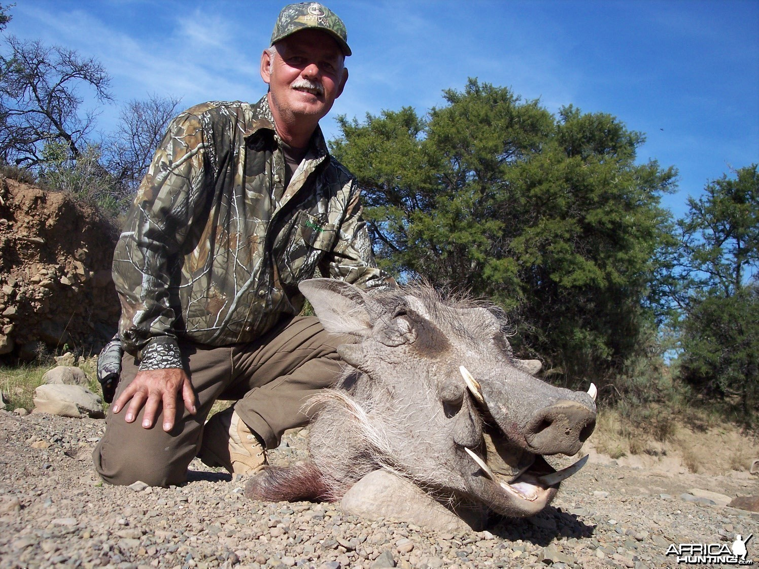 Warthog Hunt East Cape South Africa