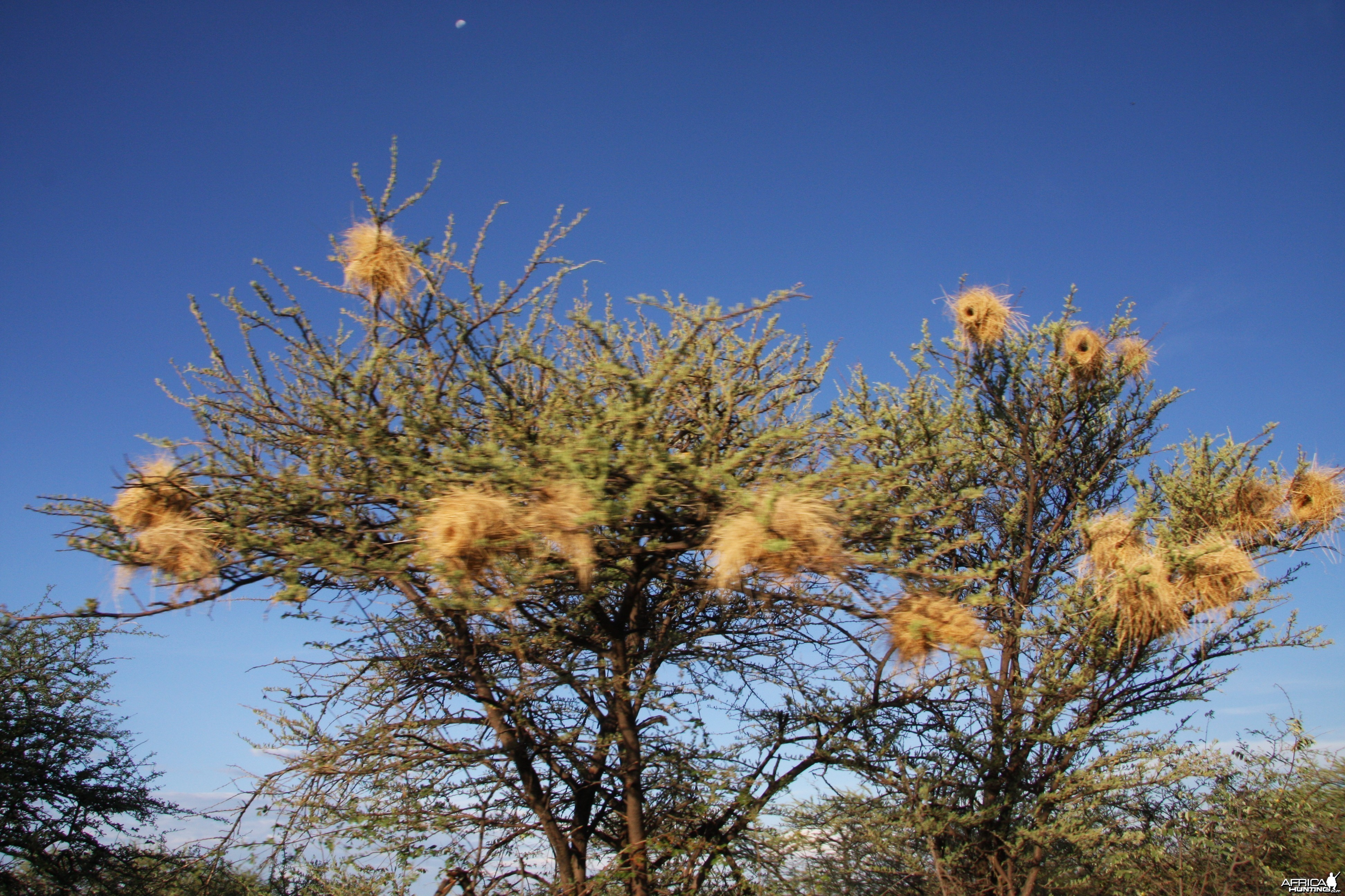 Bird nests Namibia