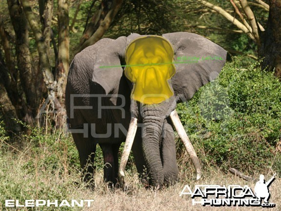Hunting Elephant Front View Shot Placement
