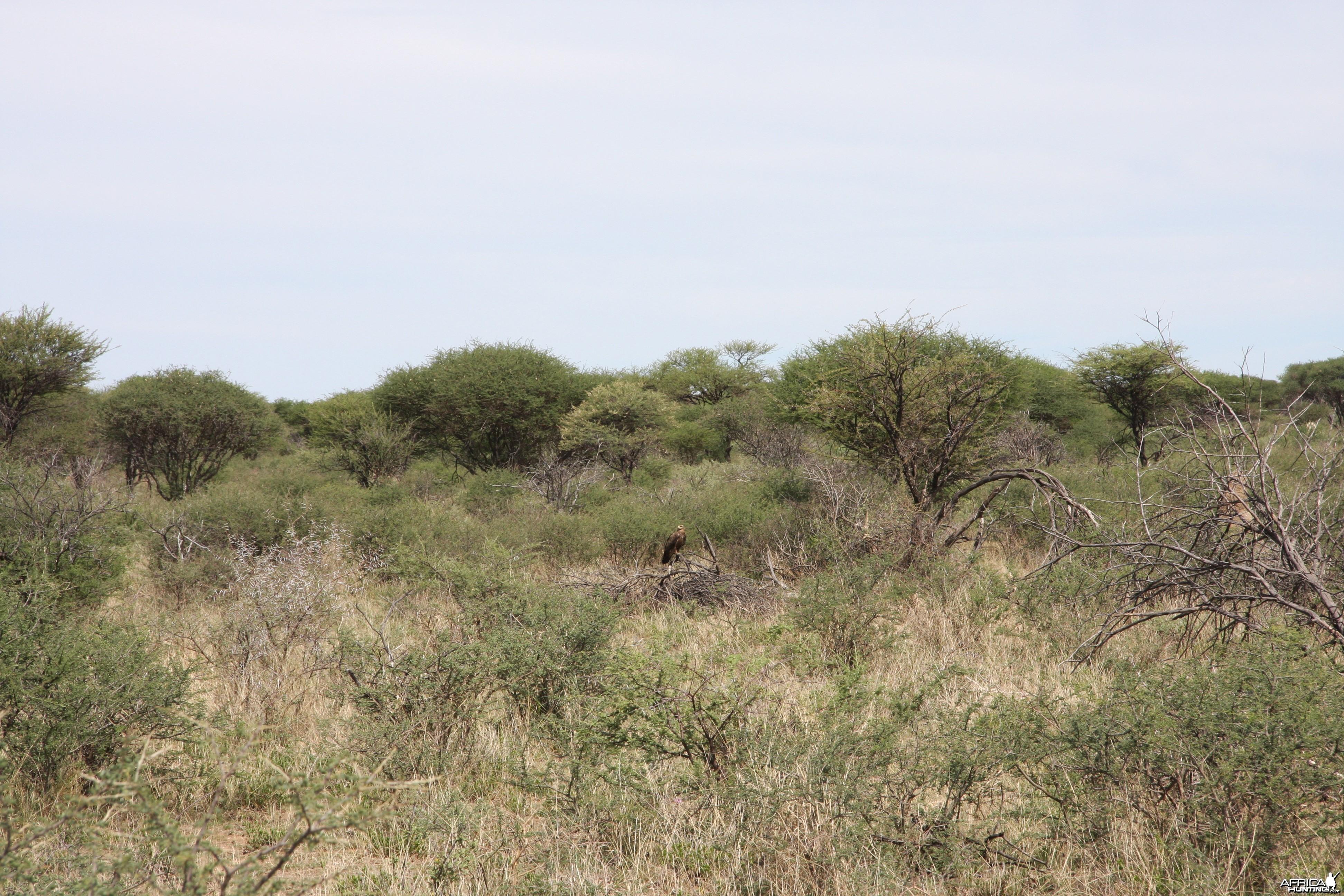 Eagle Namibia