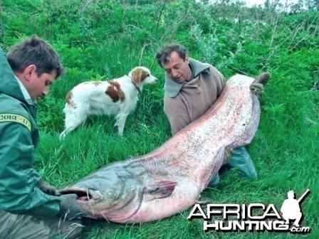 Giant catfish (2)