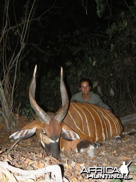 Bongo Hunted in Central Africa CAR