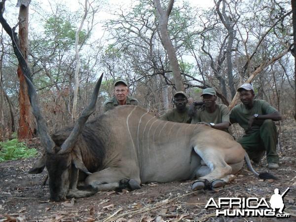 Very old, worn down Derby eland, hunted in CAR