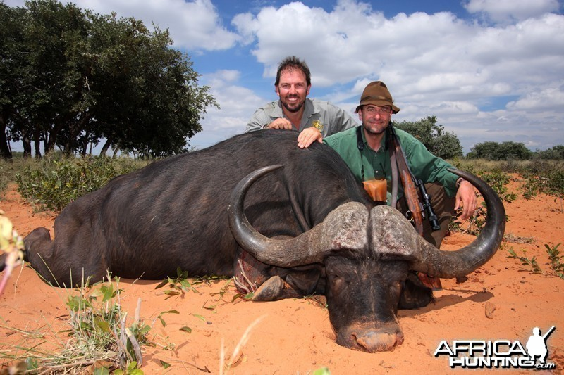 Cape Buffalo hunted in Namibia Waterberg Plateau