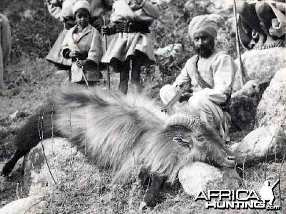 Hunting Thar India