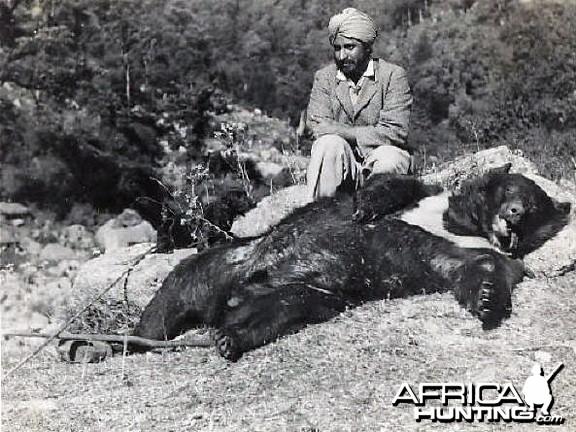Hunting Bear India