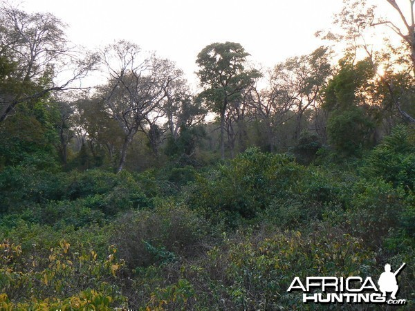 Forest of Central African Republic