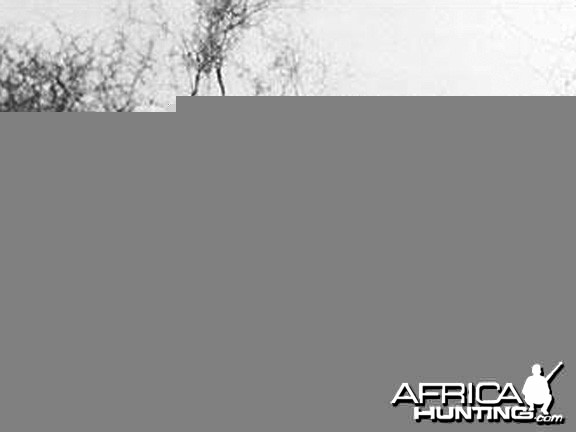 J.A. Hunter (right) and his client with an exceptionally fine bull Elephant