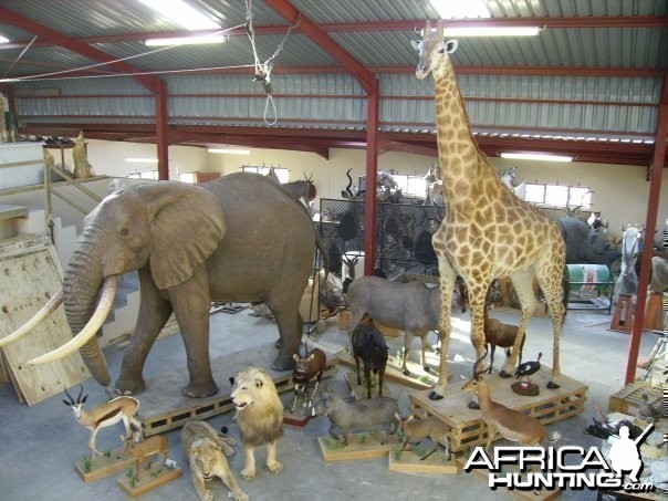 Elephant and Giraffe full mount
