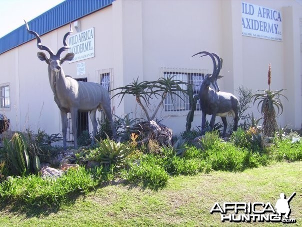 Kudu and Sable fibreglass replicas