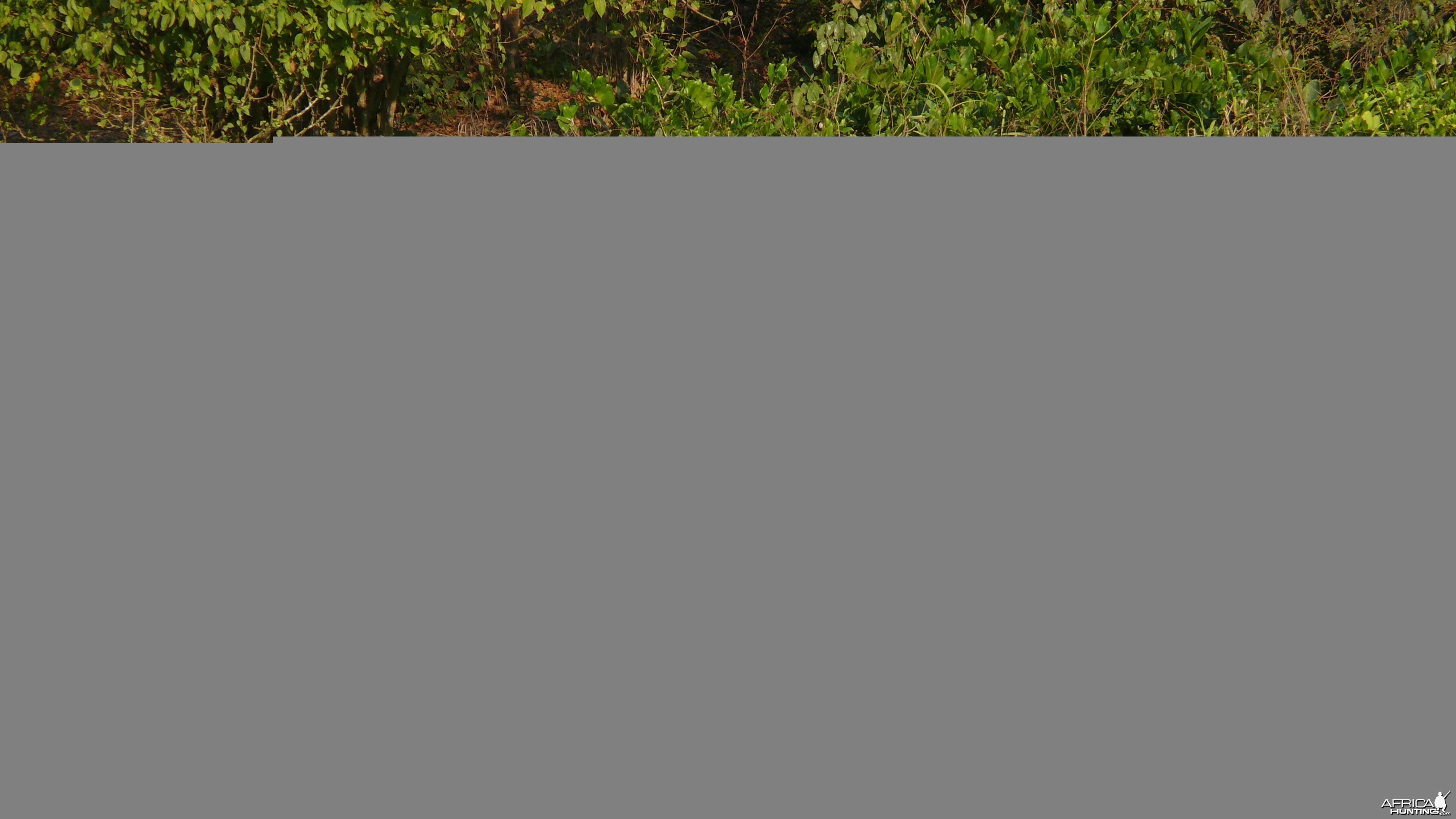 Bongo in Central African Republic
