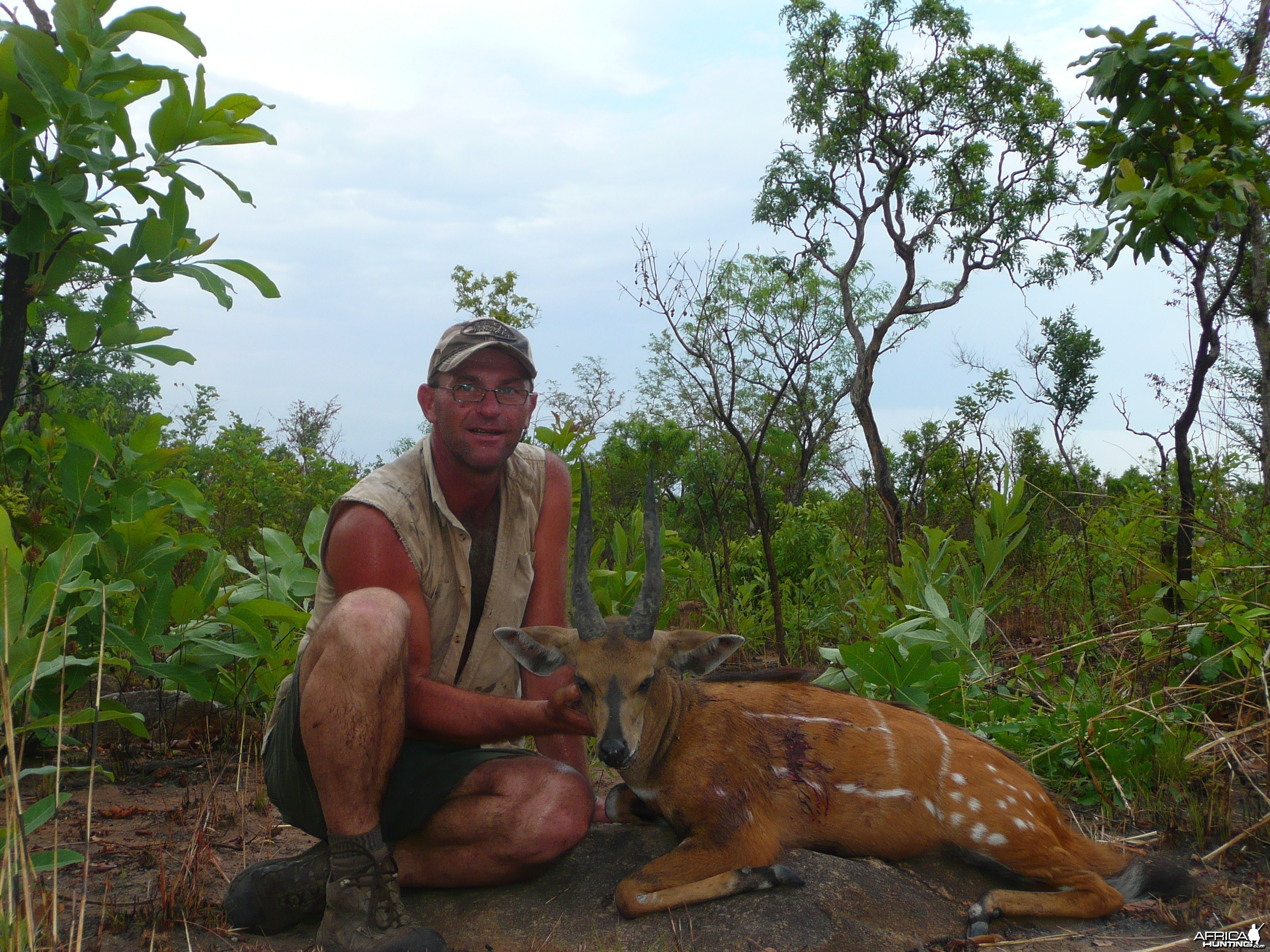 Harnessed Bushbuck hunted in Central African Republic