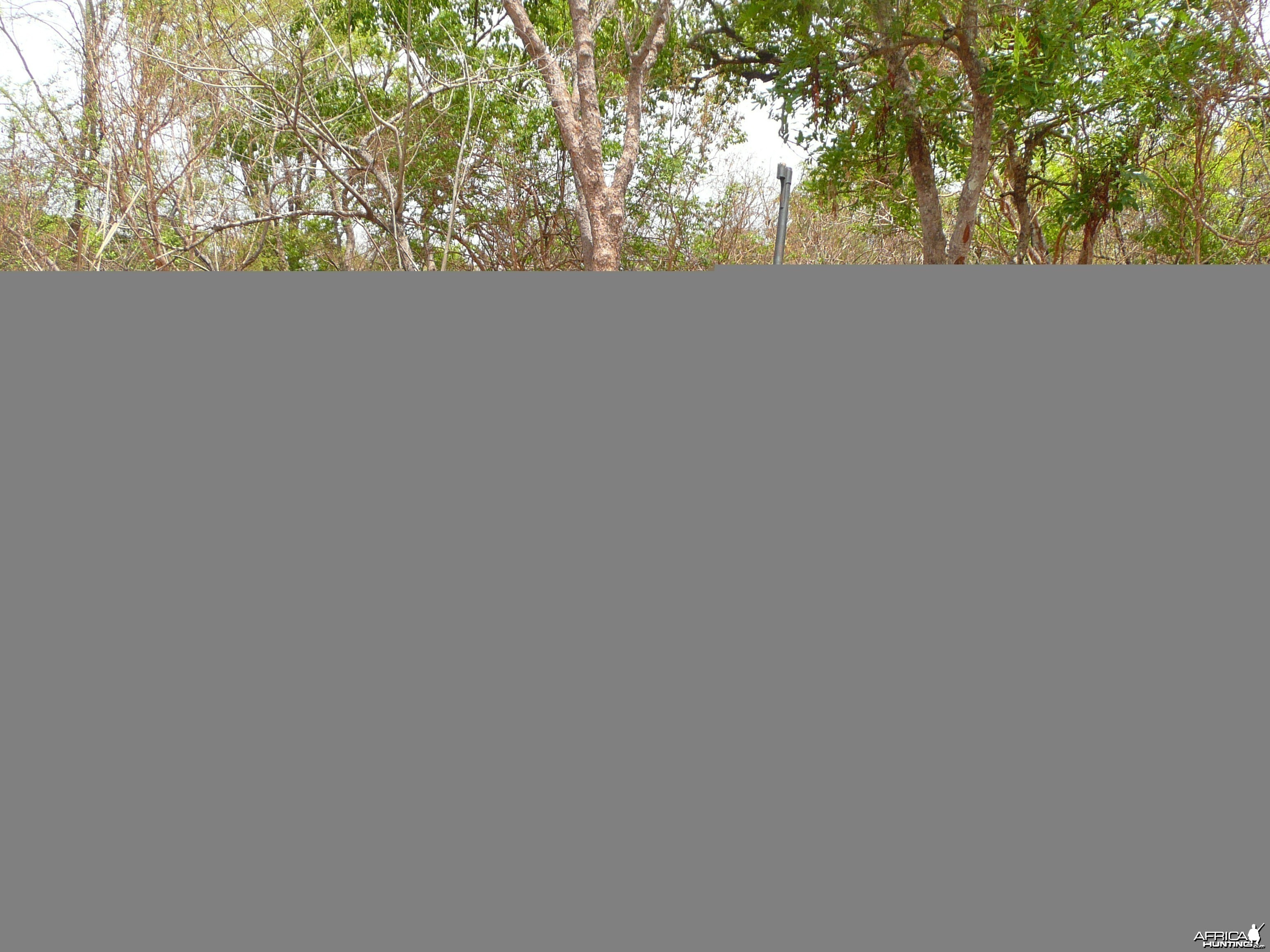 Hunting Red River Hog and Warthog