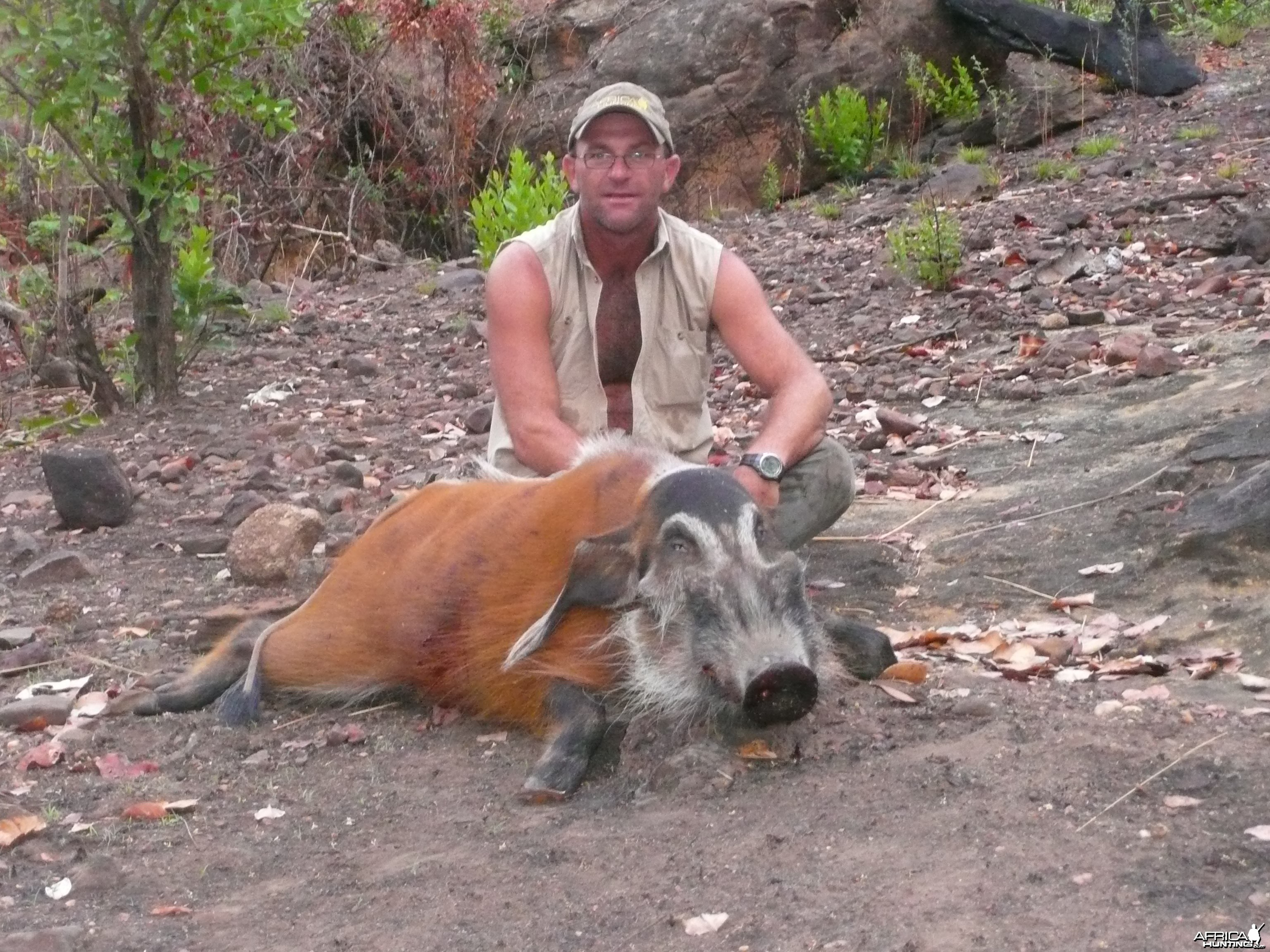 Red River Hog 66kg hunted in CAR