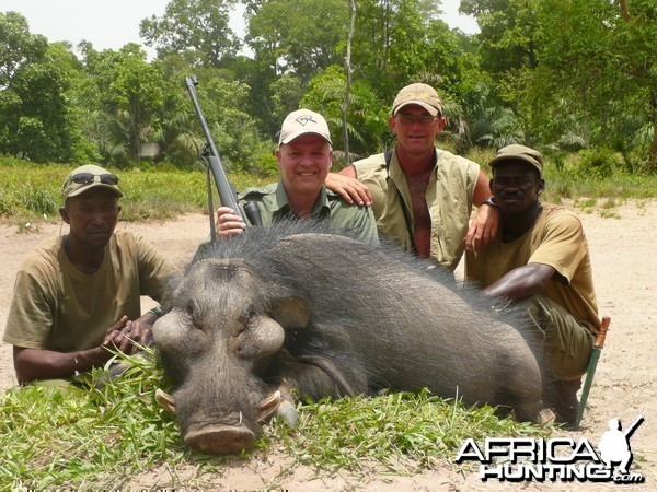 Hunting Giant Forest Hog in Central Africa
