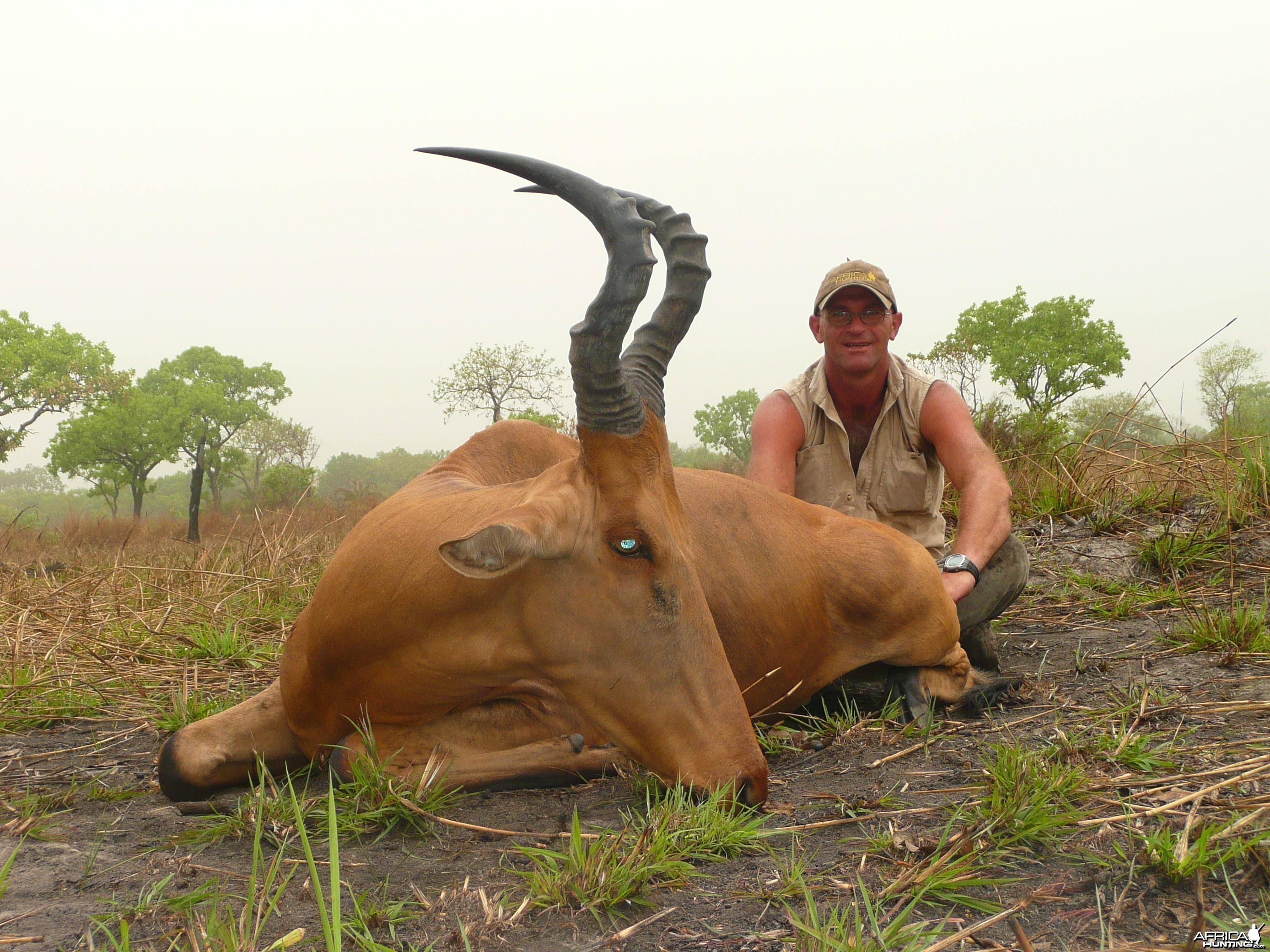 Very good 24' inches lelwel hartebeest hunted in Central African Republic