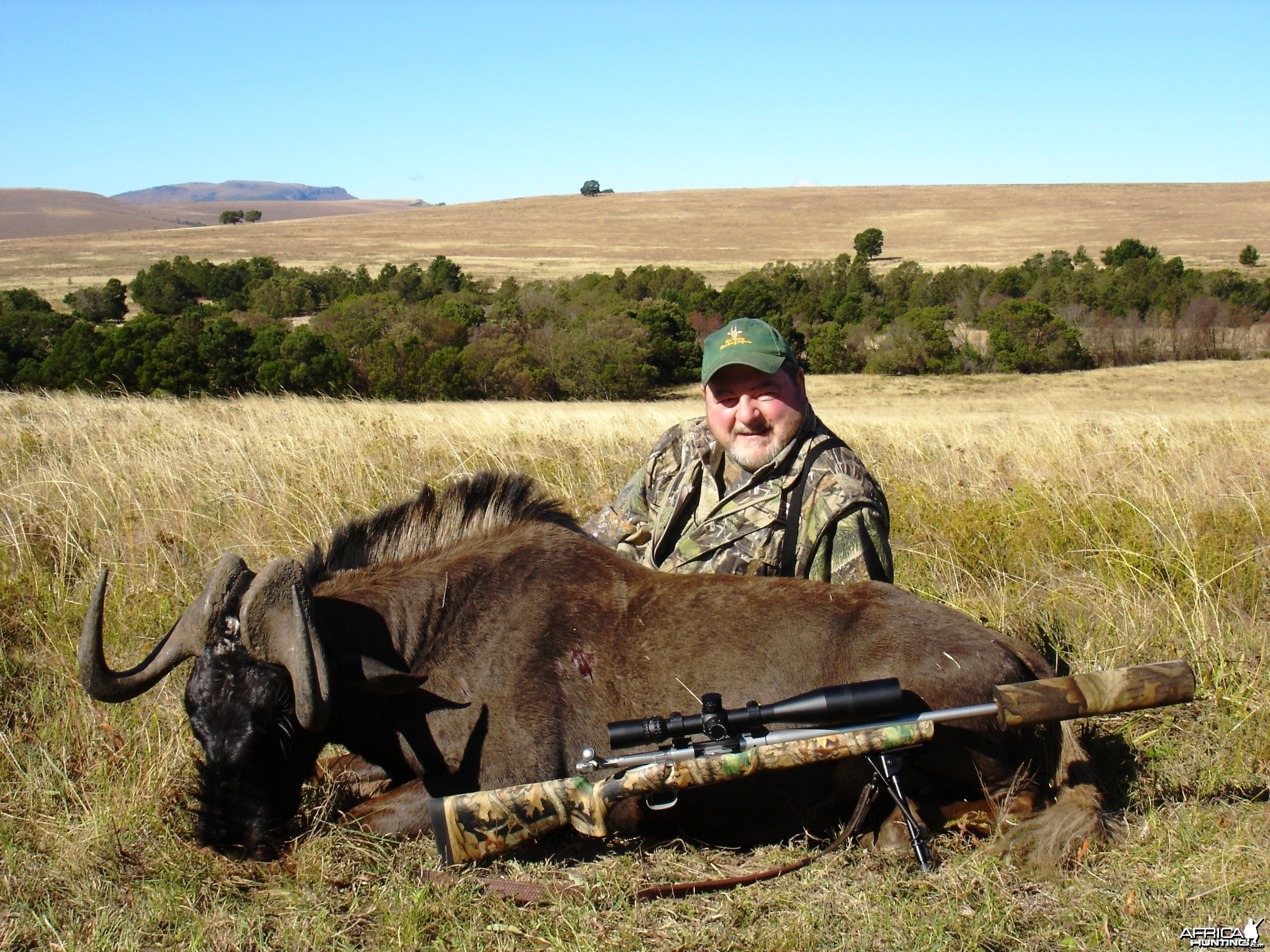 Black Wildebeest 2