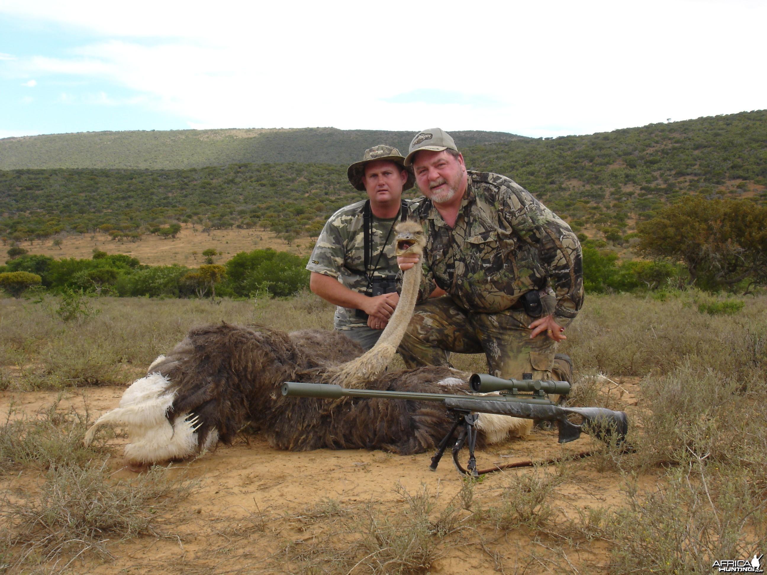Ostrich Self and Gavin
