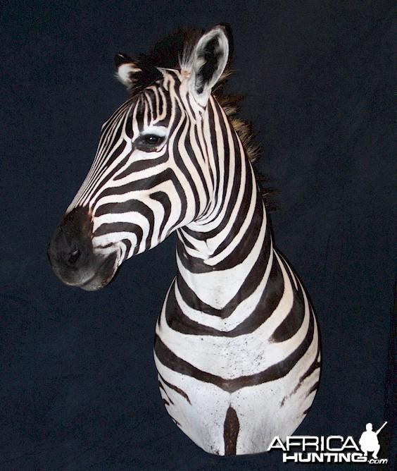 Zebra Pedestal Mount.
