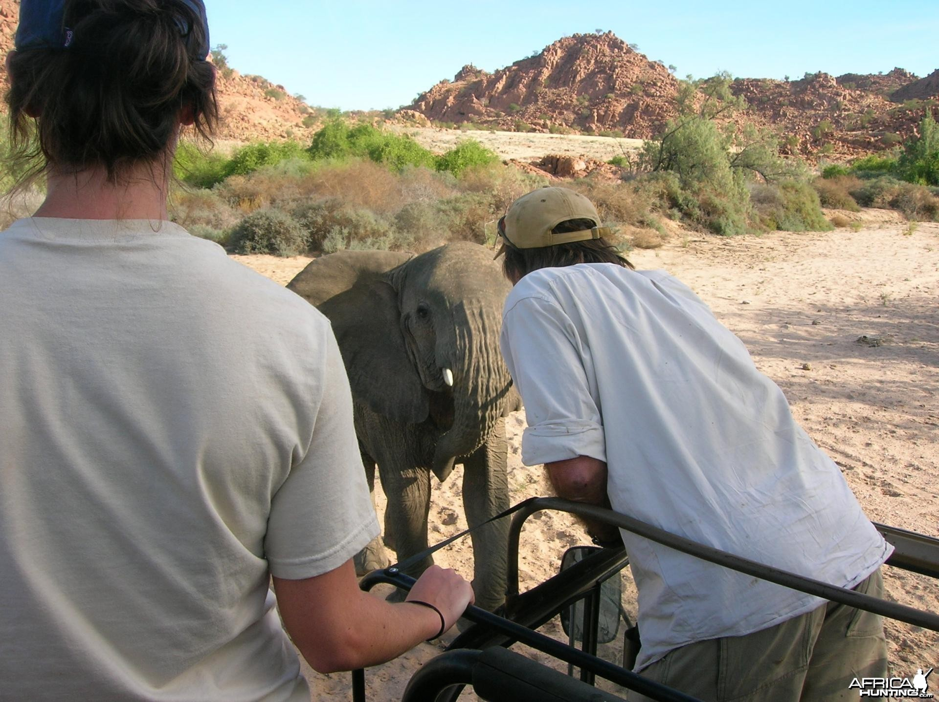 Close Encounters with Elephants in Namibia