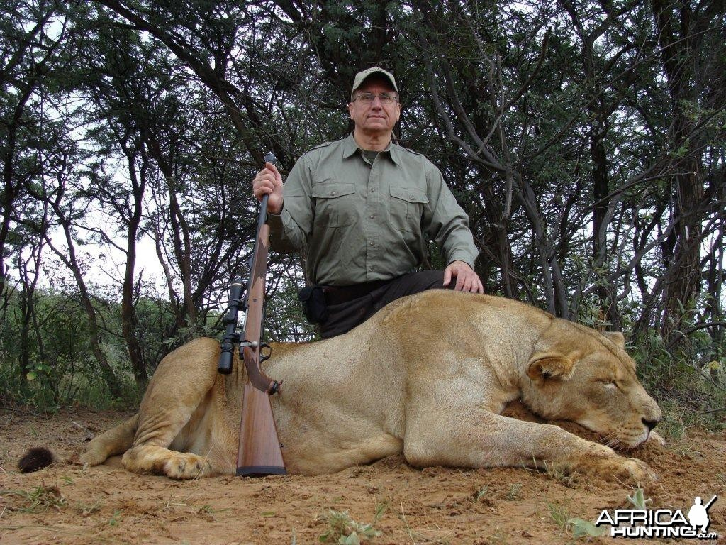 Lioness Hunt South Africa