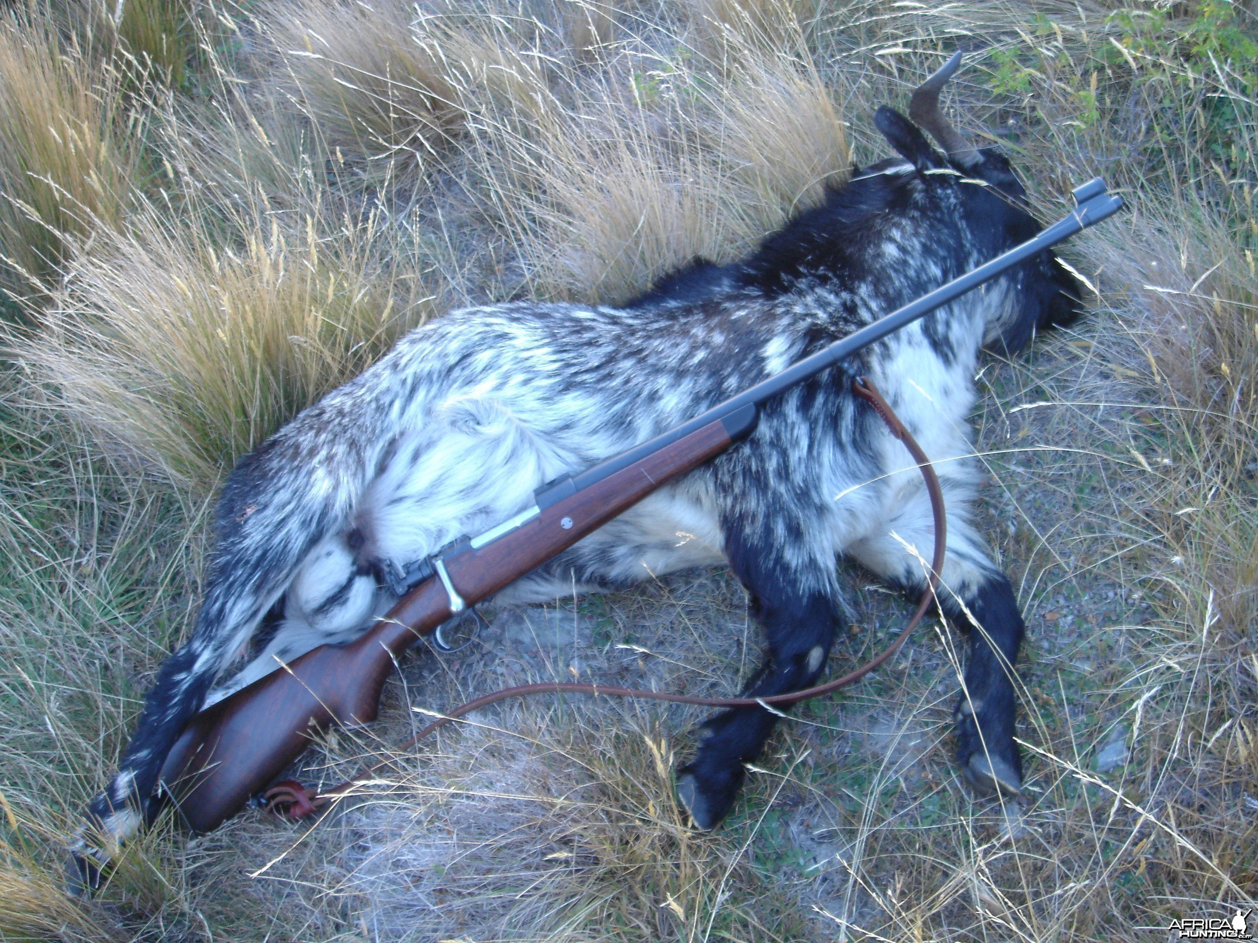 7x57 Stalking Rifle and Goat