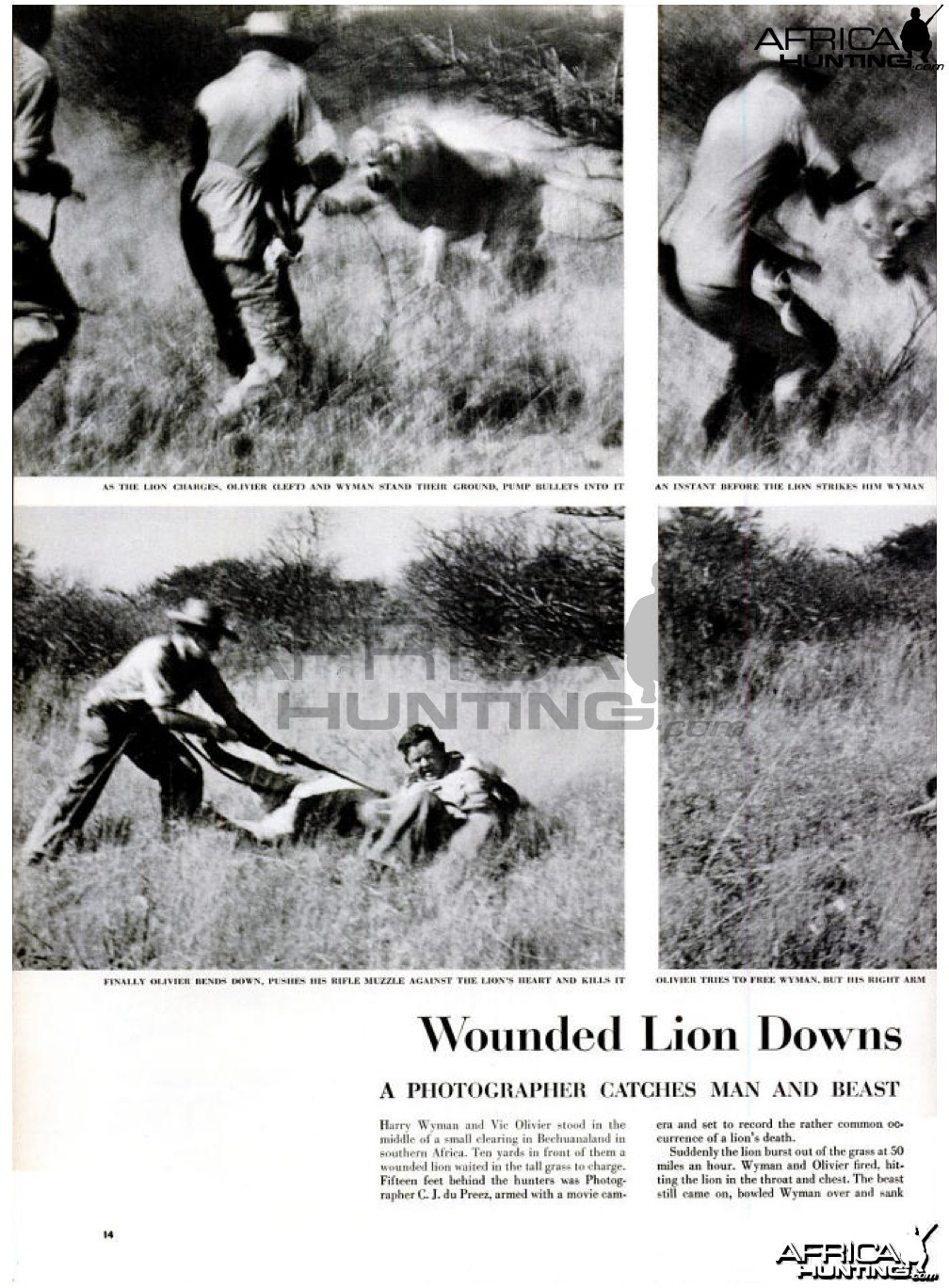 Wounded Lion Downs, 1955