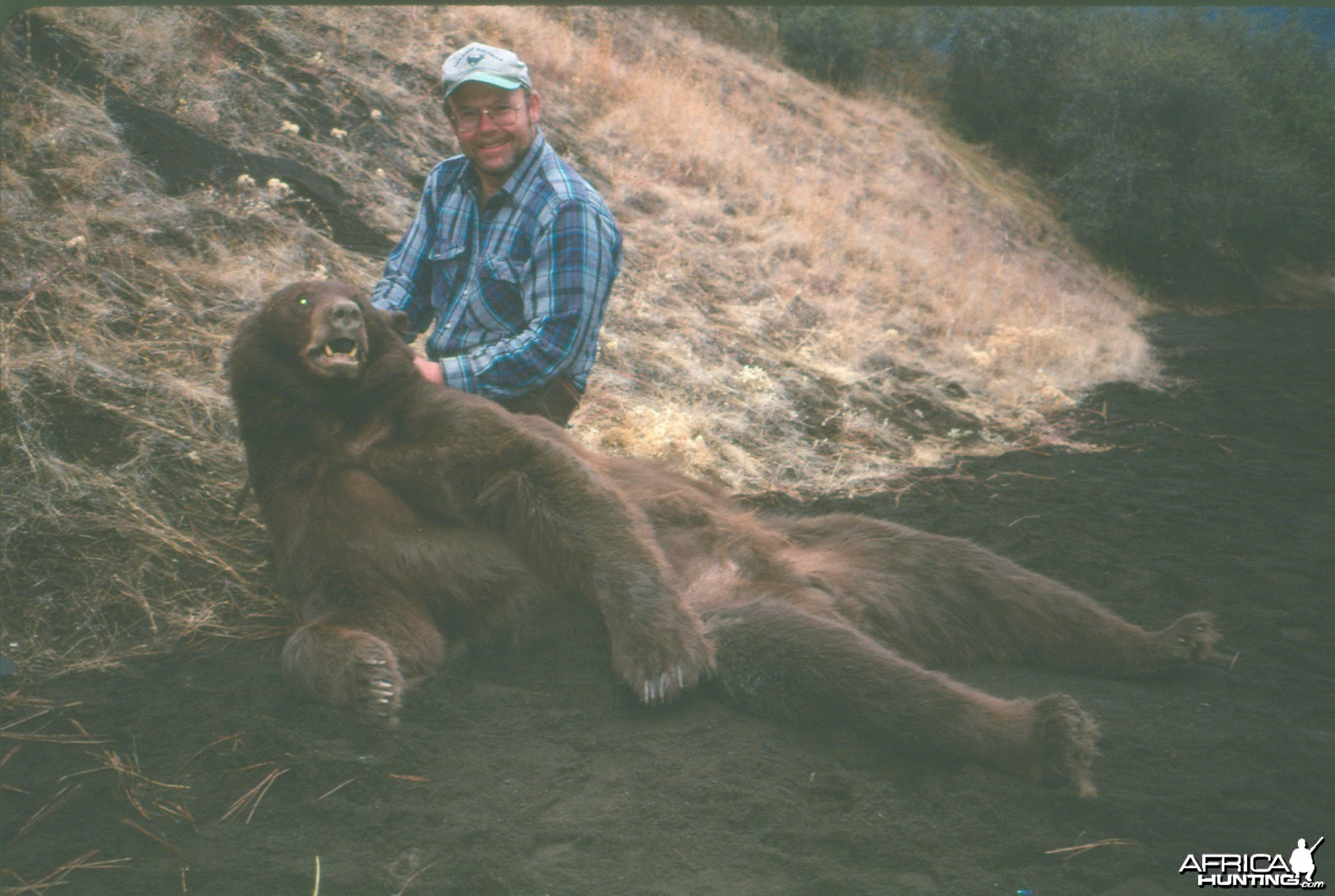 1998 California brown bear