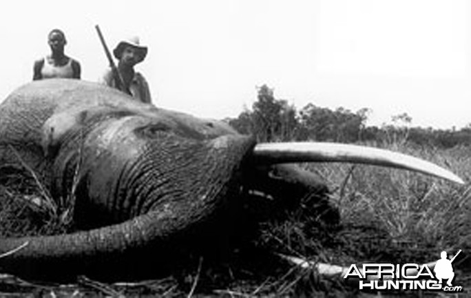 Jorge Alves de Lima, Professional Hunter, with Elephant