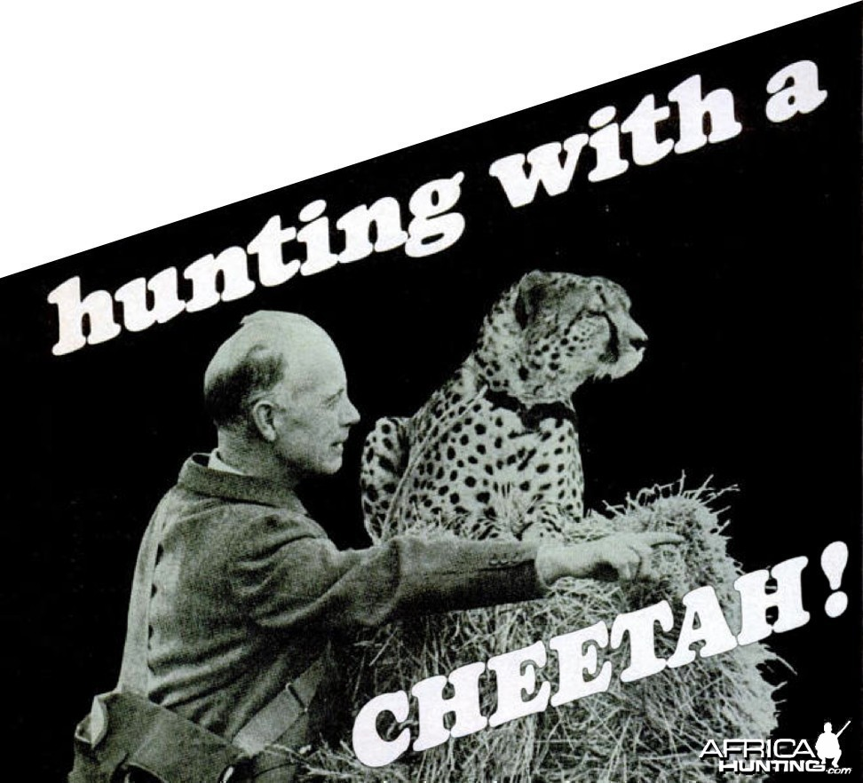 hunting with a CHEETAH!