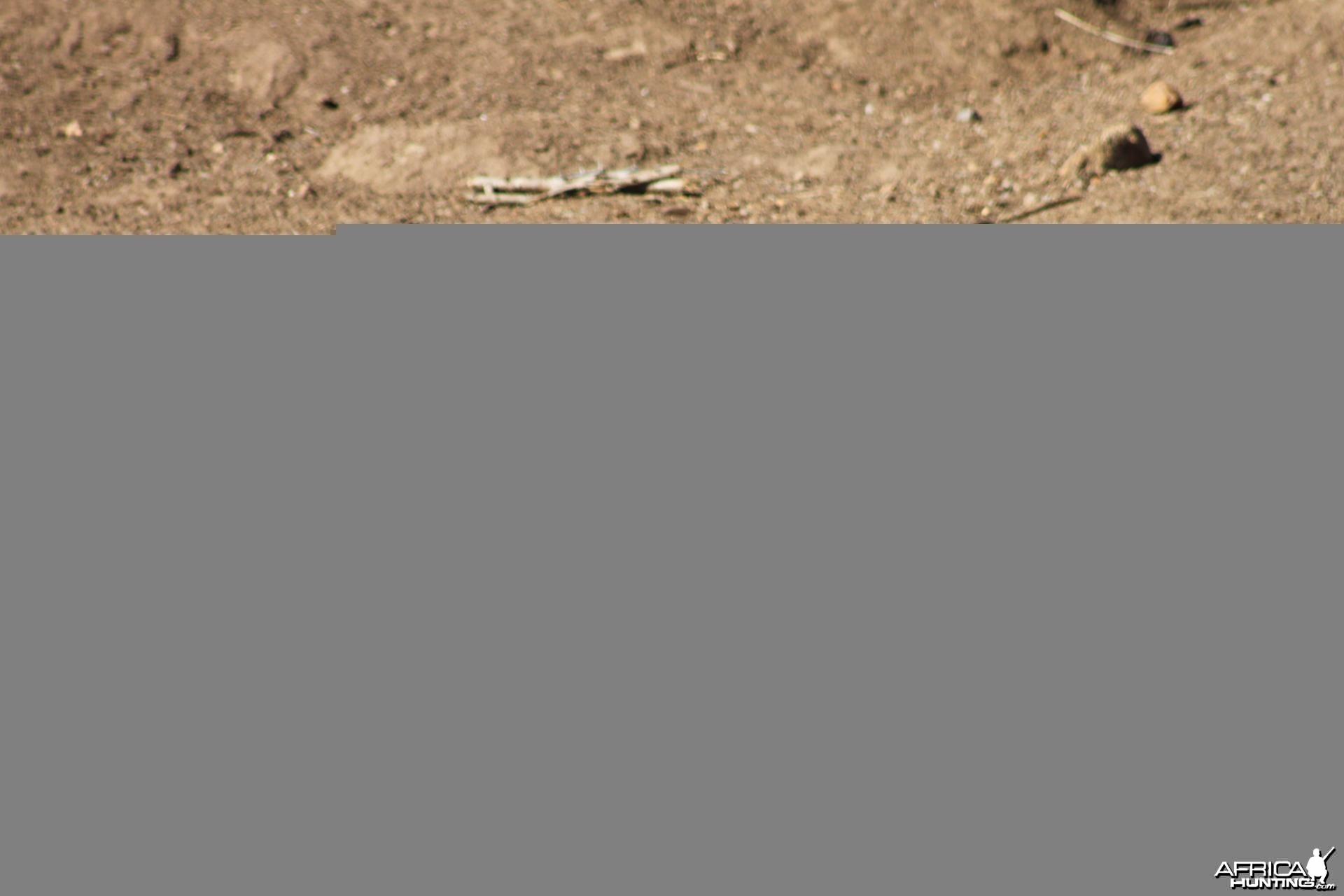 Warthog South Africa