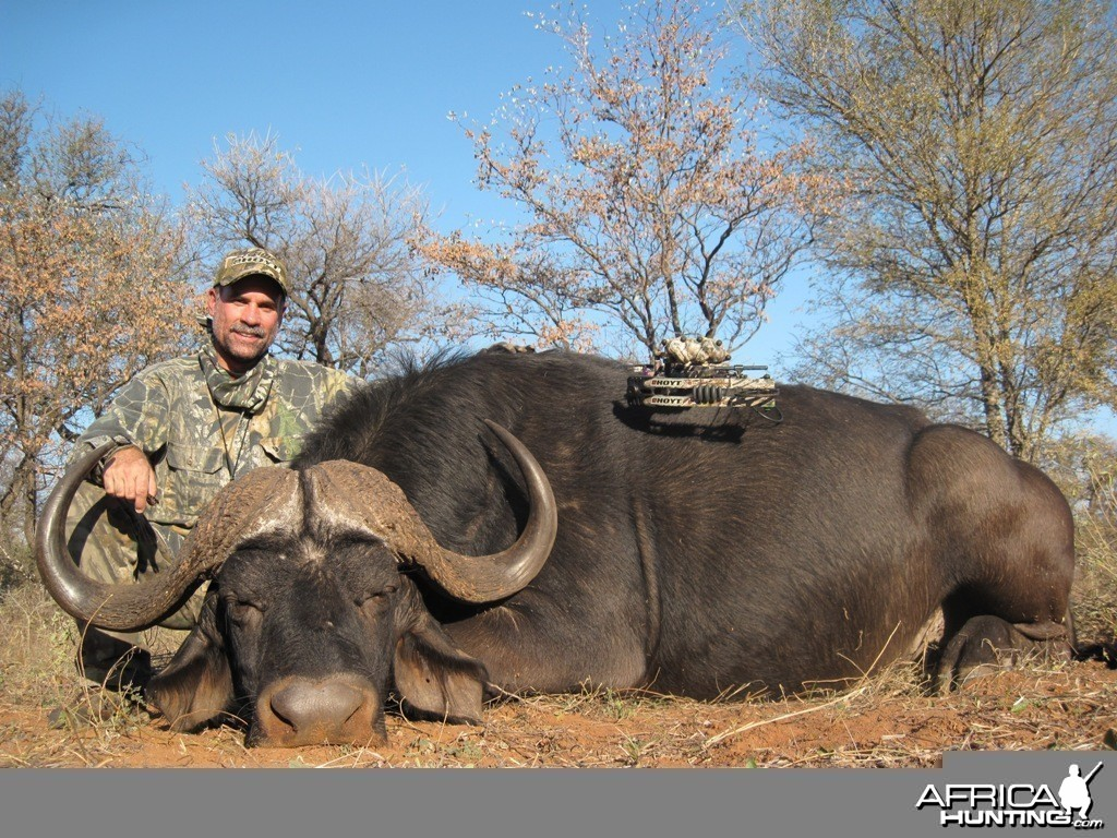 Cape Buffalo - Archery Hunt - 1 Arrow
