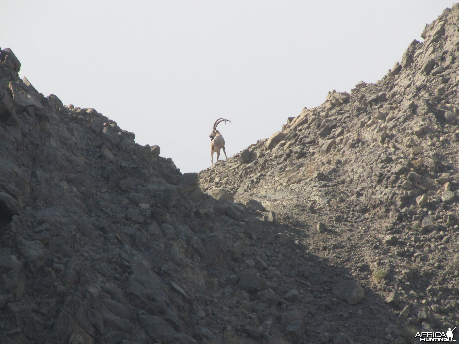 Ibex Hunt Pakistan