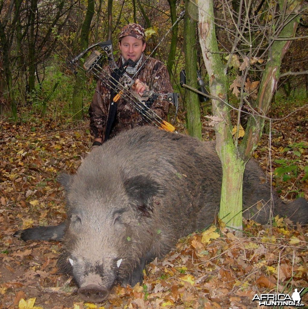 The biggest wild boar I ever shot