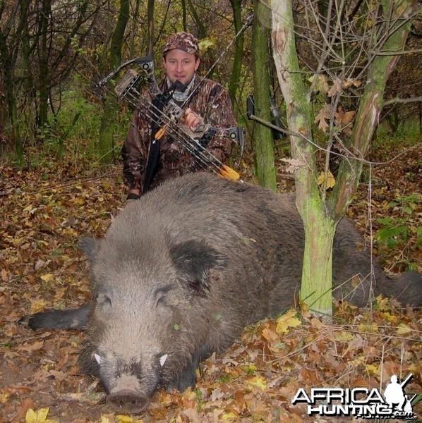 Biggest Pig Ever