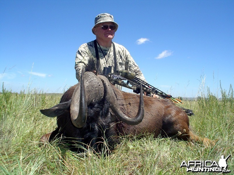Long stalk... black Wildebeest