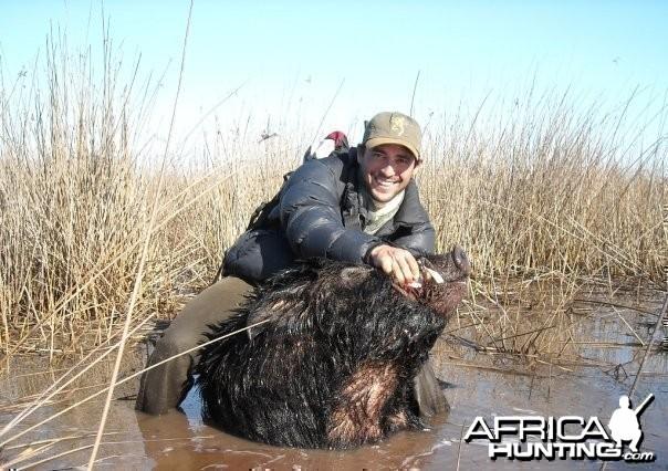 Wet boar