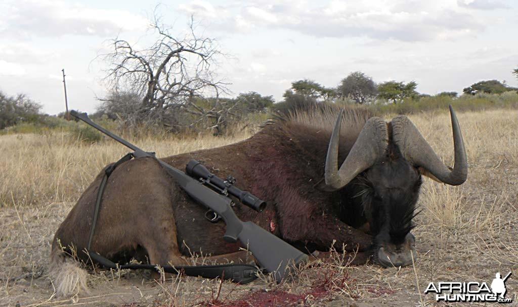 Black Wildebeest Bull - Kataneno