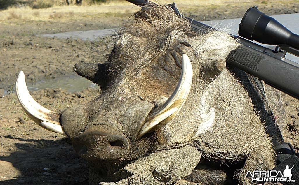 Warthog - Kataneno