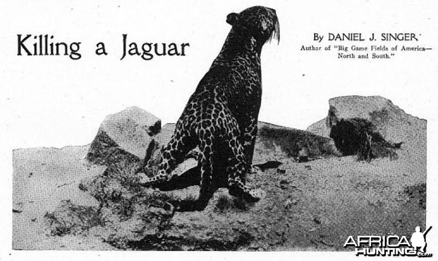Killing a Jaguar, 1915