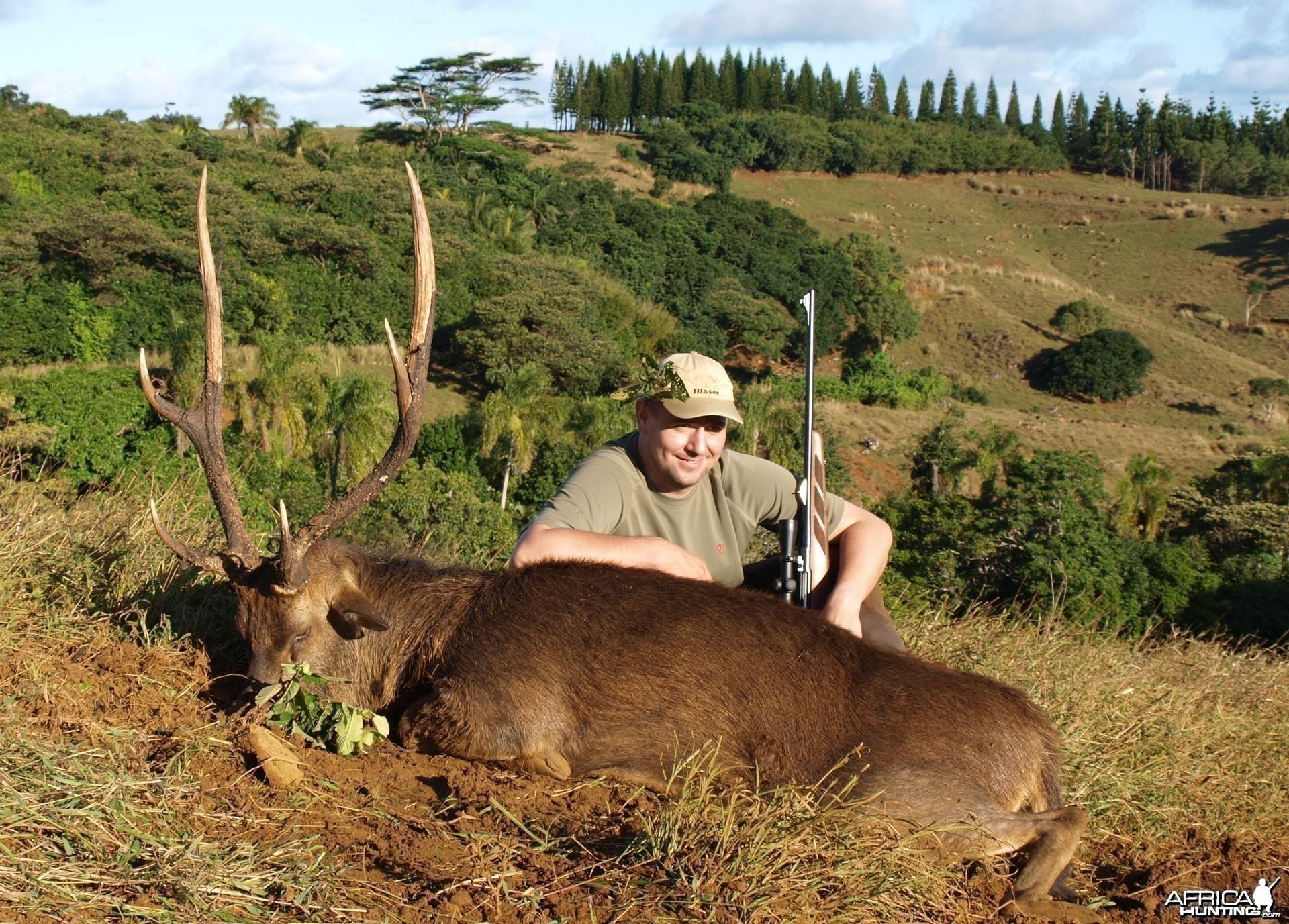 Rusa deer hunted in Mauritius