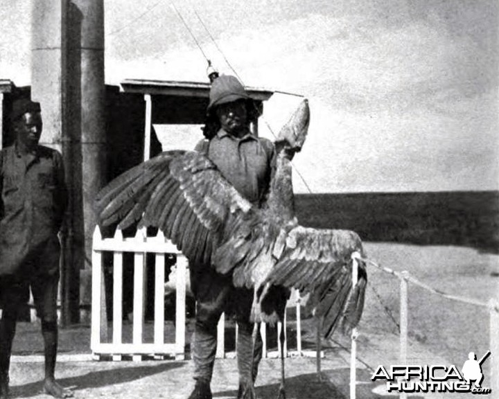 Theodore Roosevelt with a whale-billed stork at Lake No.
