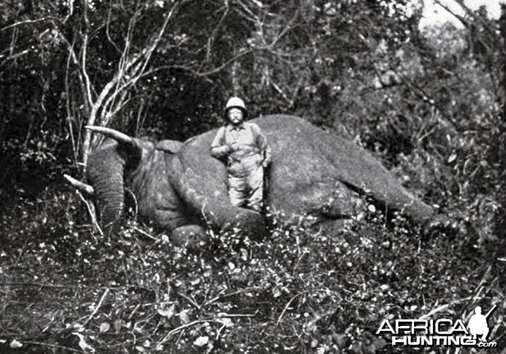 Theodore Roosevelt, the dead tusker